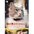 猫の街、トルコ・イスタンブール。そこに暮らす猫と人の幸せな関係を描いた話題のドキュメンタリー『猫が教えてくれたこと』待望のBlu-ray&DVD化!