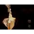 原作:石田衣良×監督:三浦大輔×主演:松坂桃李が贈る、愛のドラマ『娼年』Blu-ray&DVD9月14日発売
