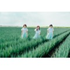 Negicco、結成15年目を記念したベスト・アルバム『Negicco 2011~2017 -BEST-』7月20日発売