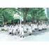 けやき坂46(ひらがなけやき)初のアルバム『走り出す瞬間』6月20日発売