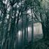 小瀬村晶(Akira Kosemura)のニュー・アルバム『In The Dark Woods』