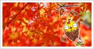タワプラくん 2012/11/10号
