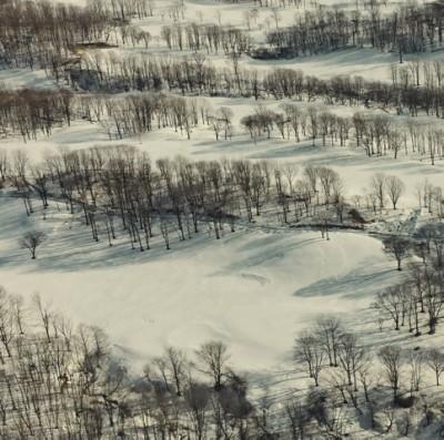 トウヤマタケオ『四辺は森として』